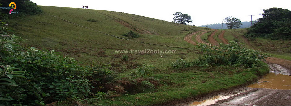 Activity in ooty
