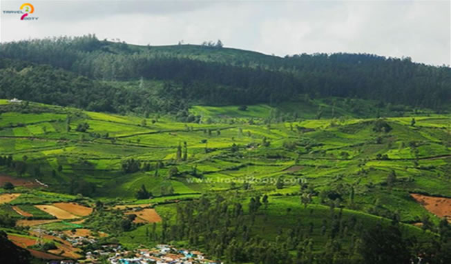 Ever-Green-Nilgiris