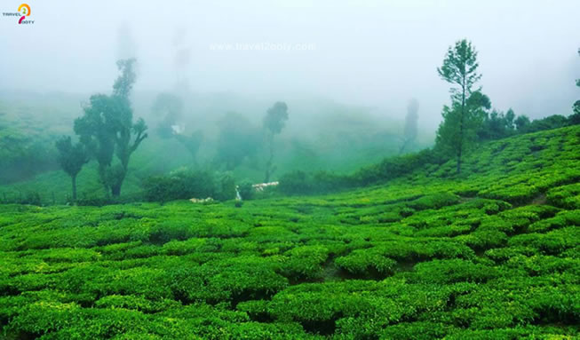 Gudalur-tea-estate