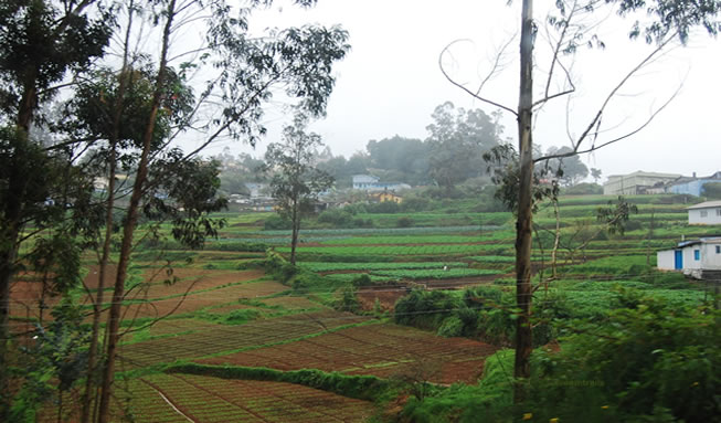 Ooty recent image