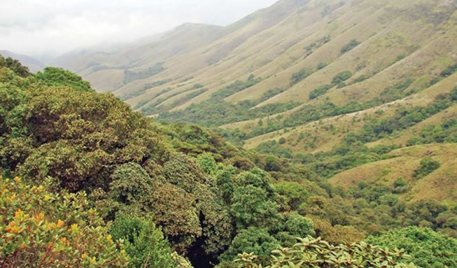 mukirithi-national-park-ooty