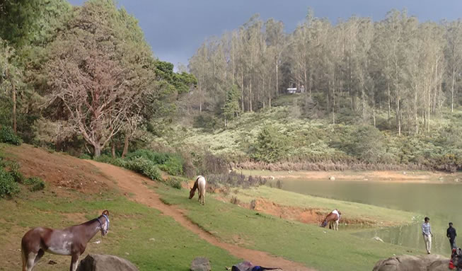 ooty nature image