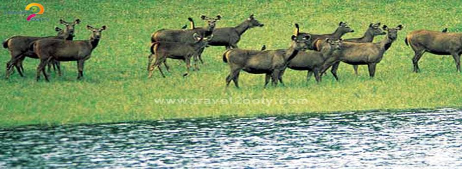 bndipur national park