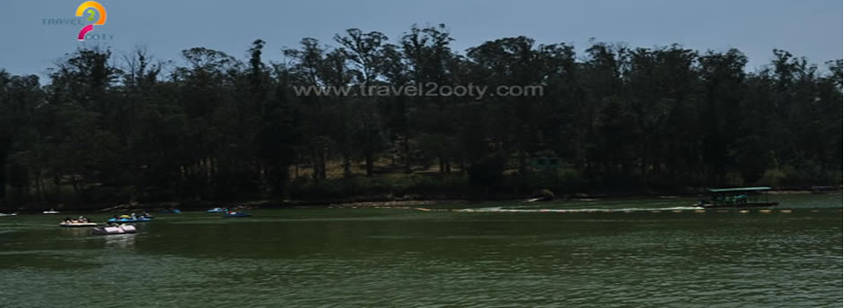 ooty lake trees