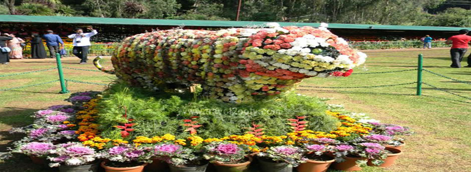 ooty botanicalgarden shows