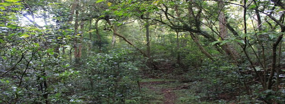 longwood shola 1