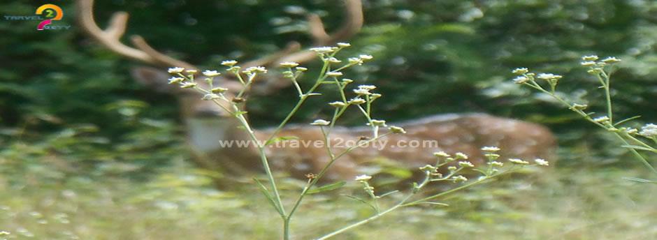 mudumalai natinal park