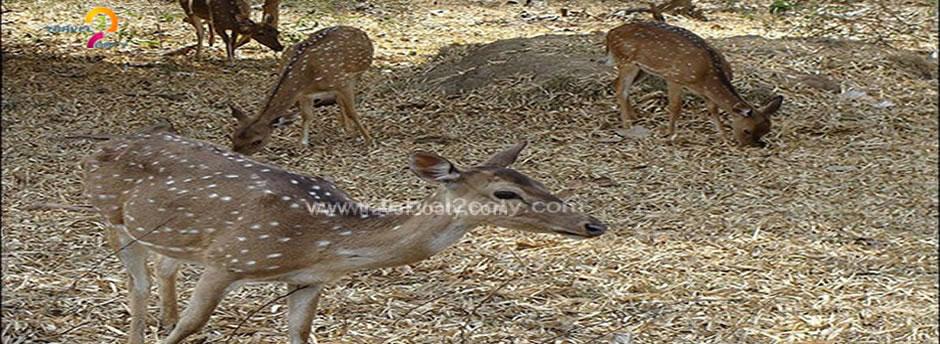 mudumalai animals sight