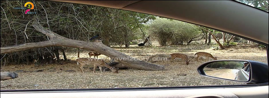 mudumalai deer sights