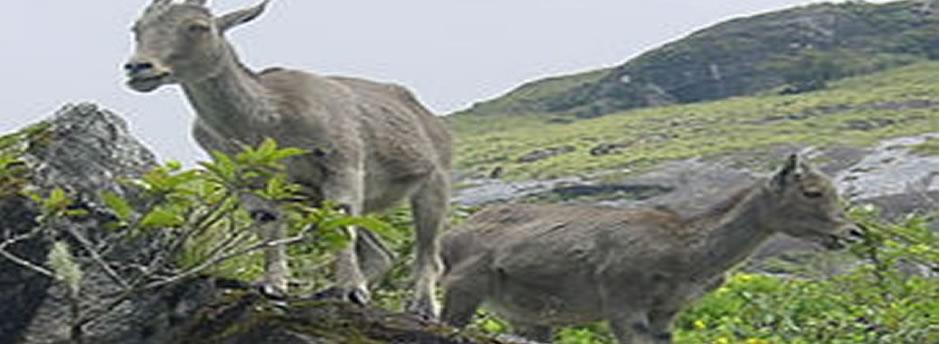 mukurthi grasslands